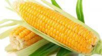 """corny"" theme"