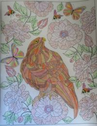 Hawk - coloring book