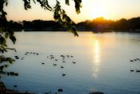 sunset with the ducks