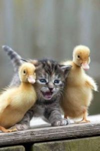 Mommy, they called me a duckling too