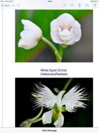 Odd blooms