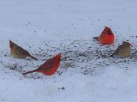 Two Cardinal Couples