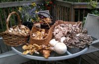 My best friends went mushroom hunting, just in case