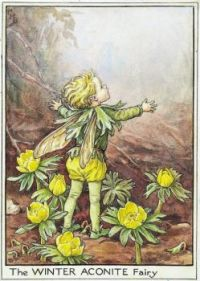 The Winter Aconite Fairy (mini)