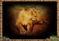 queen of the felines