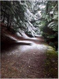 A wintry path