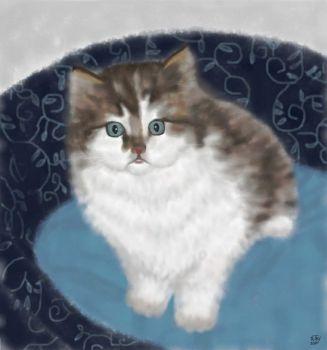 Cats I Know - Chloe (Kitten)