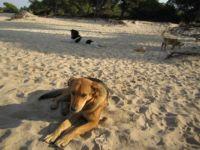 Greek stray dogs at beach