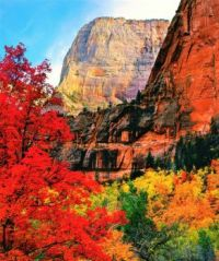 Zion National Park In The Autumn...