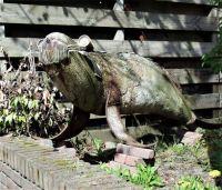 DSCF1403 Walrus van de zijkant