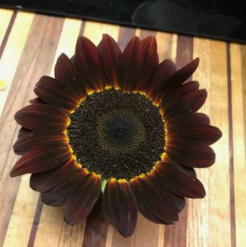 ONE OF OUR SUNFLOWERS 2018