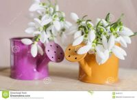 Small decorative watering cans