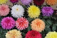 Flowers a