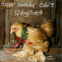 Happy Birthday Edie!!!  (2dogs7cats)