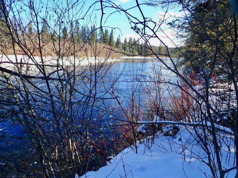 Magpie River through the Brambles