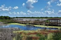 Boardwalk on Big Slough