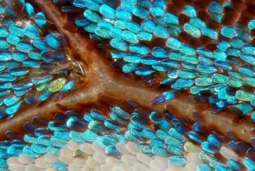 Wing scales of a Butterfly.