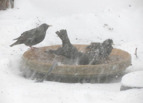 Bathing During a Blizzard
