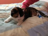 Tabitha_Back from Hospital