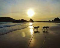 Dog walk at sunset