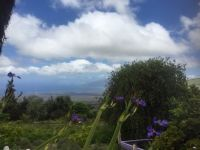 Maui from Lavender farm