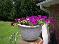 Pat's flowers 1