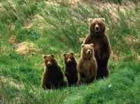 1  ~  'Family portrait'  ~  Brown Bear.