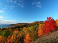red-tree-on-hill