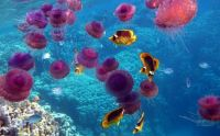 jellyfish-and-tropical-fish