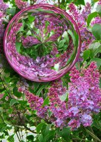 Lilac Orb