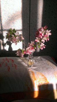 Crabapple blossoms in afternoon sun