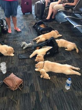 Layover at the airport