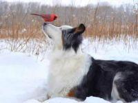 Bird Play