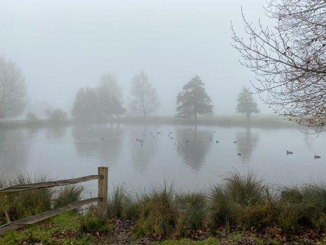 Fog Richmond Park