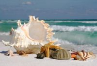 beautiful-sea-shell-on-sand