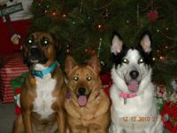 ChristmasDogs2010