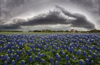 Shelf cloud over bluebonnets in Texas