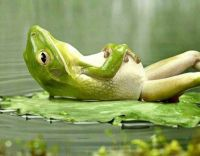 Froggie Relaxing on a Lily Pad