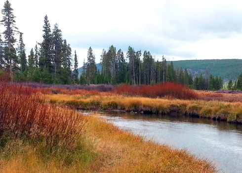 Fall color at Indian Creek, Yellowstone National Park, 9/23/13