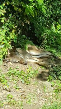 vlček spí