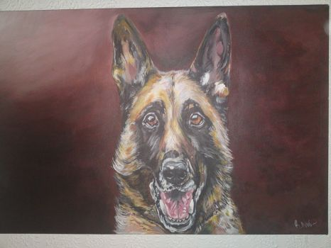 german_shepherd_by_ryzouk-d5glzqz