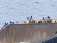 BIRDS on a Barge