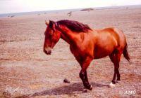 New theme tomorrow - HORSES  (27 JIGIDI'S 14th Anniversary/Birthday-2007)
