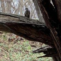 Hawk found on my walk