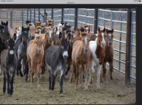 Wild horses & burros
