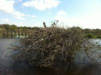 Heron and Egret Rookery 2