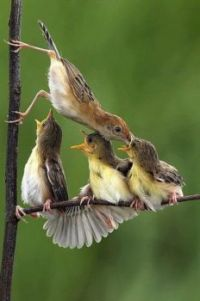 Hungry birds fed by their mom