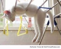 Cat-hung-out-to-sleep-