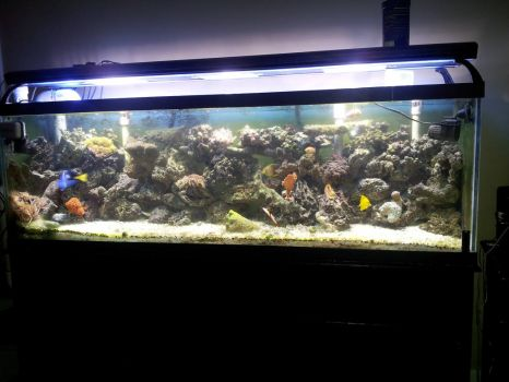 My Nephew's Home build Aquarium..