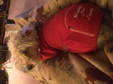 Milo waiting for Santa!